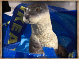 otter in the bag